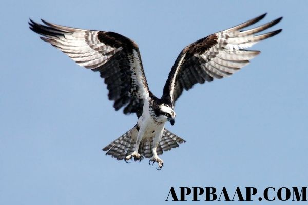 photographers uses shutter-speed-aperture-iso-chart to catch flying animals shots appbaap